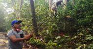 দুর্লভ প্রজাতির লজ্জাবতী বানর উদ্ধার ; লাউয়াছড়ায় অবমুক্ত